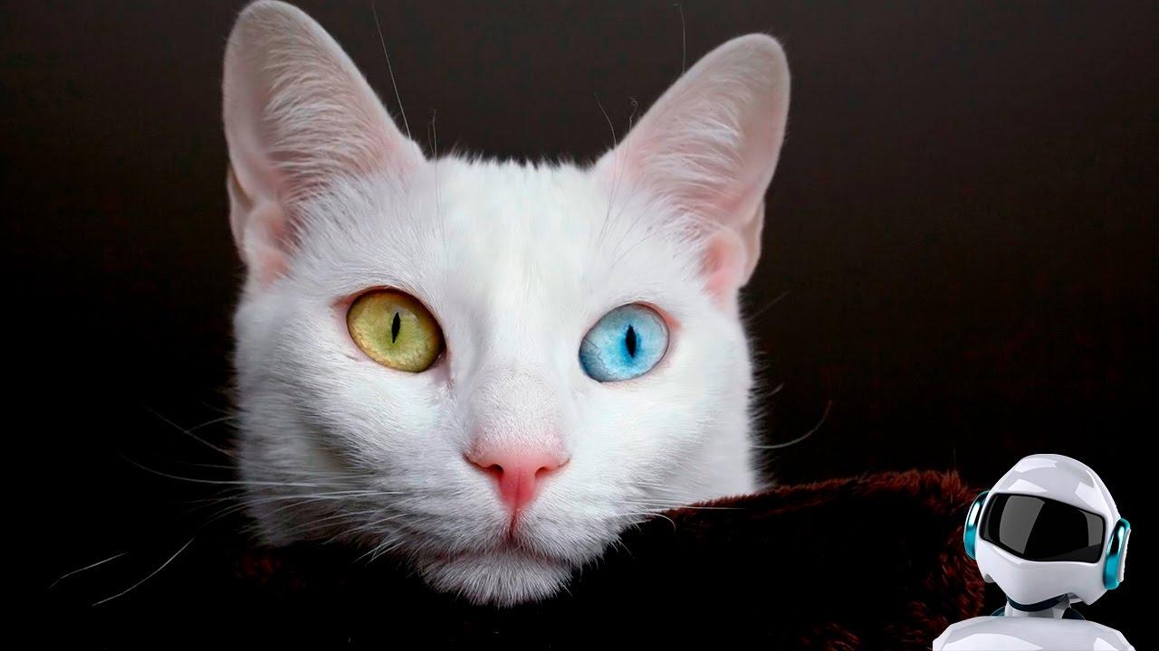 Смотреть приколы про котов русские
