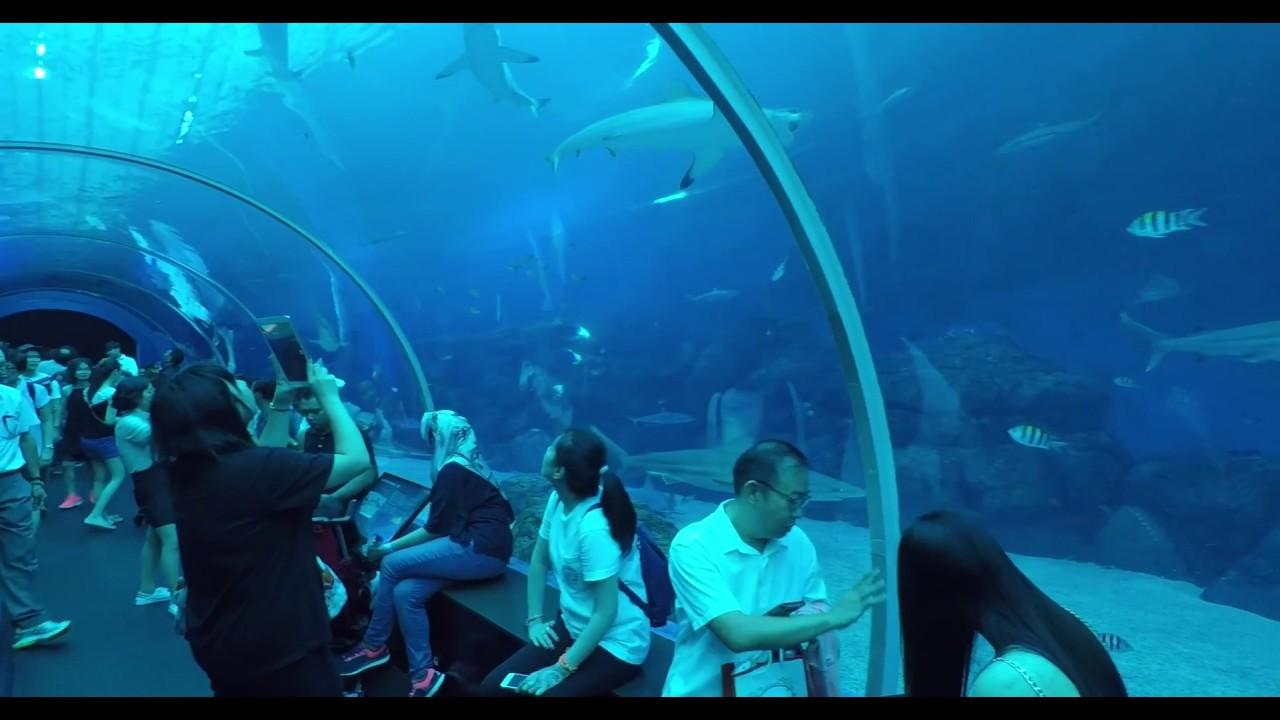 Sea Aquarium Sentosa Island Singapore