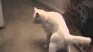Пьяные кошки?