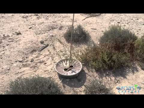 Successful planting Dubai desert with the Groasis Waterboxx