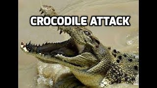 croc attack crocodile in australian hawkesbury river nsw australia 2000 au not an alligator