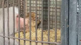 Wild animals / дикие животные / 4K  Ultra HD Video
