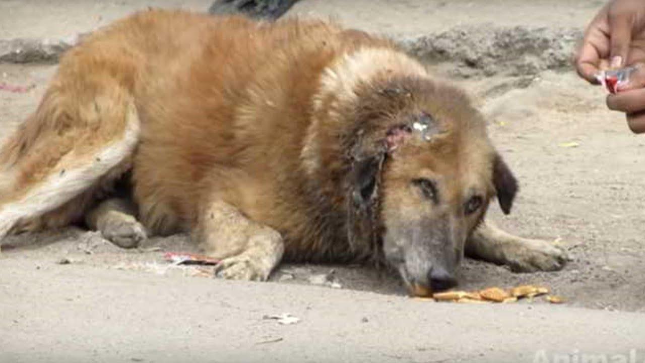 Все обходили эту старую, бездомную собаку с открытой раной на голове, она была покрыта мухами