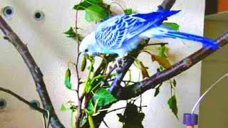 ПОГРЫЗУШКА для попугаев. косичка из веток березы.  Hand made. Александрийский попугай