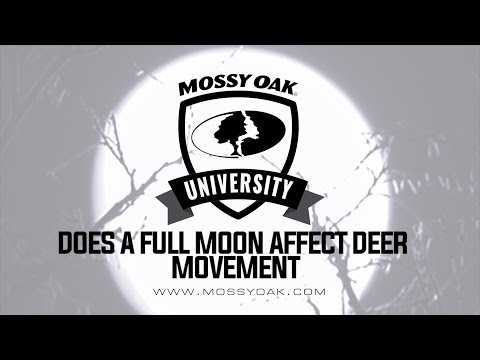 Does A Full Moon Affect Deer Movement