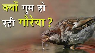 गौरैया चिड़िया  बिलकुल लुप्त होती जा रही है 'World Sparrow Day'  March 20