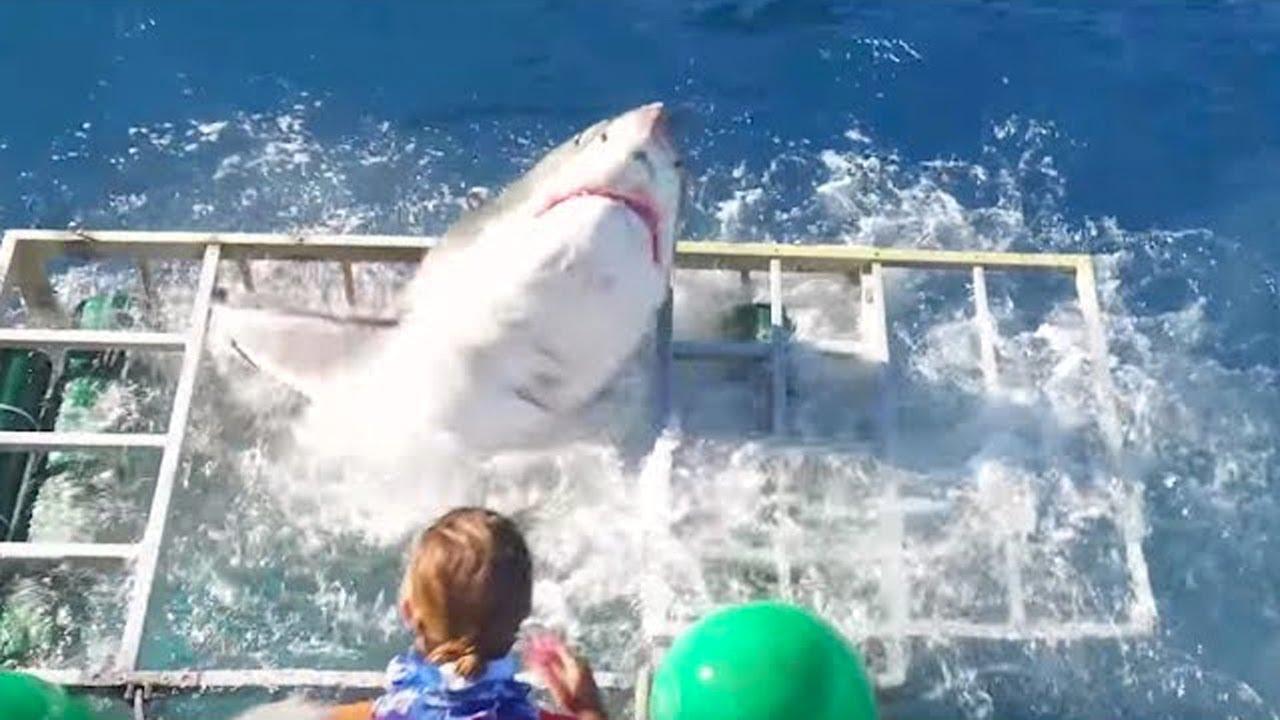 10 نهايات مأساوية للغوص مع أسماك القرش!