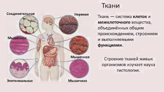1)Ткани  строение и функции.(Биология 8 класс)