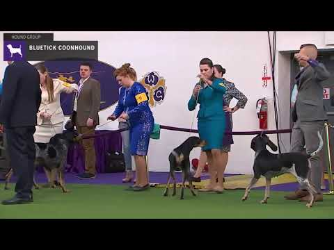 Bluetick Coonhounds | Breed Judging 2020