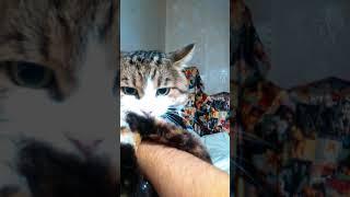 Кот Мурик кусает руку, думая, что это - кошка))))