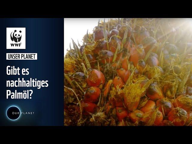 Gibt es nachhaltiges Palmöl?   WWF Unser Planet
