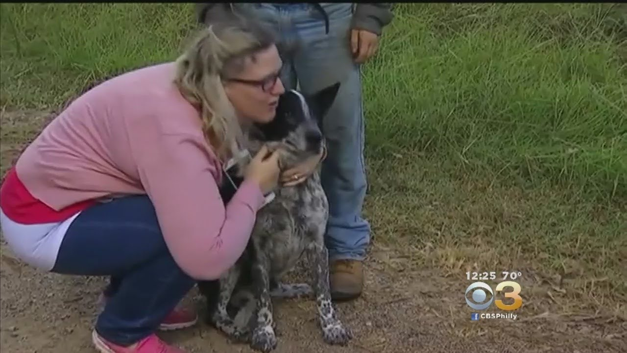 Partially Blind, Deaf Dog Saves Little Girl Lost In -9925