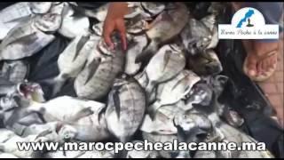 Pêche au Maroc : séjour de pêche à IMSOUANE  ????? ?????????