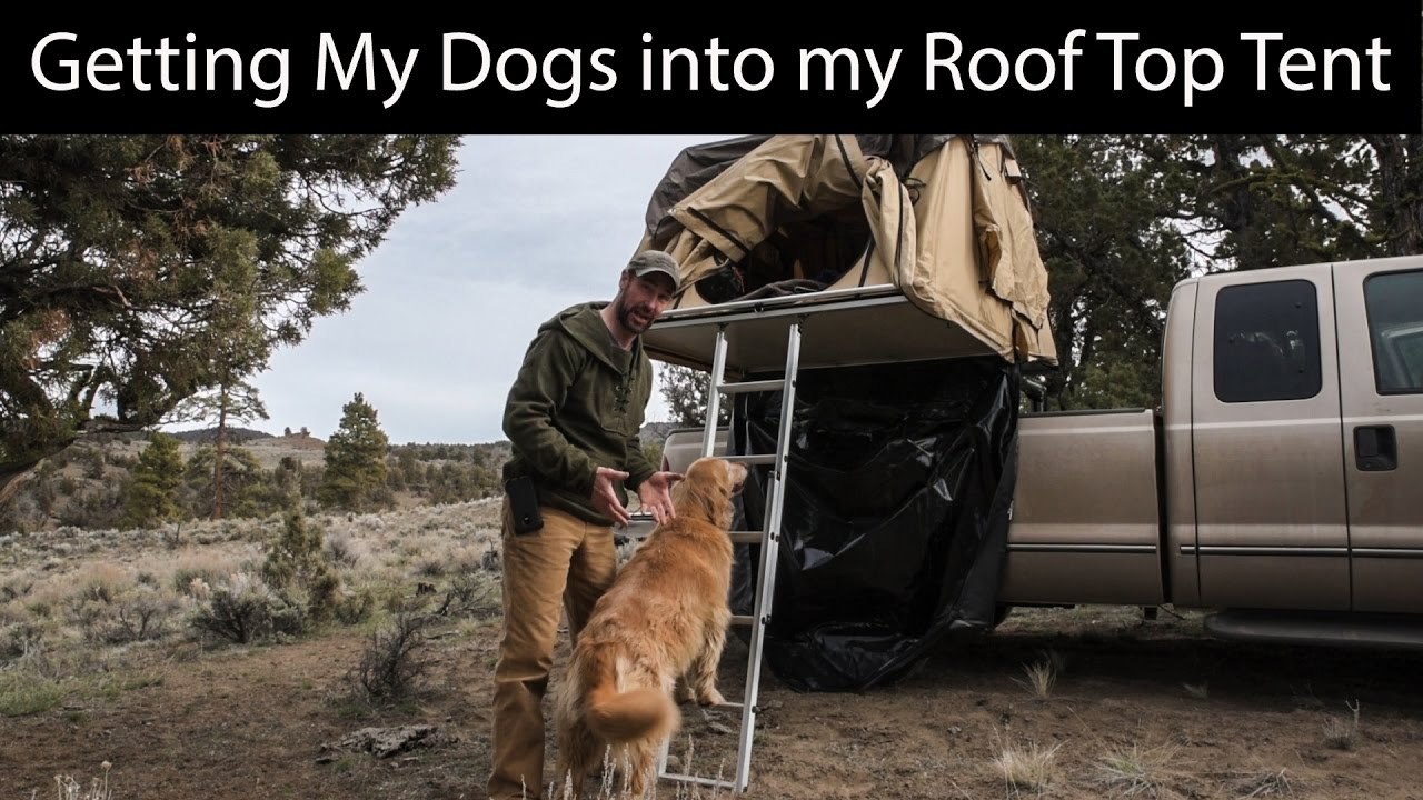 Roof Top Tent Car Camping How To Get Dogs In The Tent
