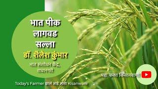 भात पिक लागवडीविषयी जाणून घ्या, राधानगरी भात संशोधन केंद्राचे डॉ. शैलेश कुंभार यांच्याकडून