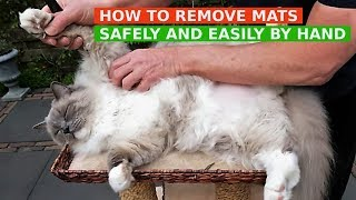 How to Remove Mats from Cat's Fur Safely and Easily by Hand (Bowie The Ragdoll Cat)
