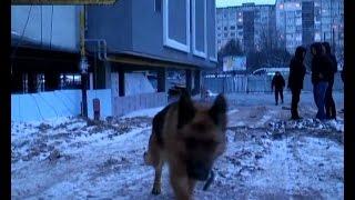 На Сумщині службові собаки знайшли арсенал зброї