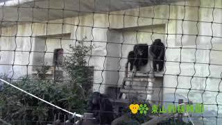チンパンジータワーの一部を、新チンパンジー舎へ移しています。チンパ...