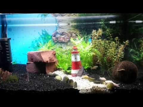 Neues Aquarium: Fische ziehen um