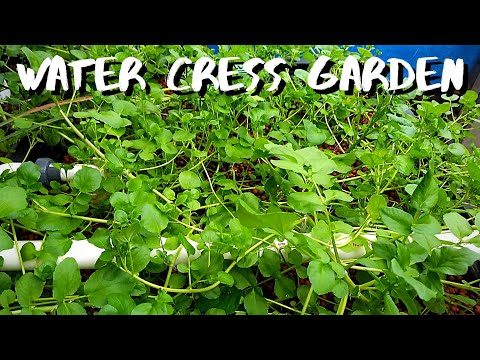 Aquaponic system Renovation part 20- Constant height aquaponics grow bed (growing water cress)