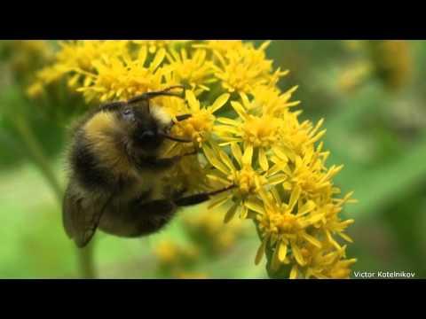 Интересные факты о насекомых Музей фактов