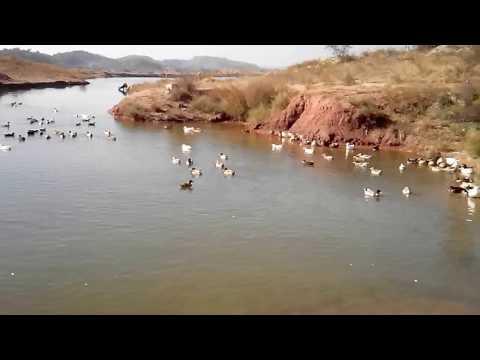 how to start a duck farming business 03459442750 Zain Ali farming in Pakistan