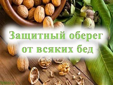 Сколько белка в орехах, содеражание белков и количество в