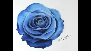 TIMELAPSE:  Drawing a blue Rose