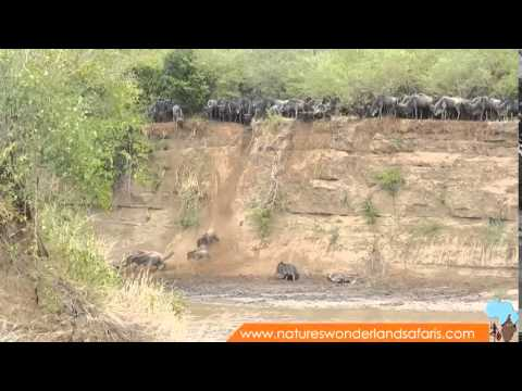 Wildebeest Migration in Kenya Masai Mara Part 2