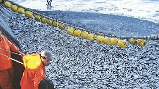 Amazing Big Catch Fishing on the Sea - Catch Hundreds Tons Fish With Modern Big Boat