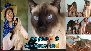 My pets and a cute siamese cat