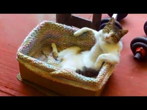Grappige Katten Compilatie 2015 - Grappige Video'S 2015 - 720P