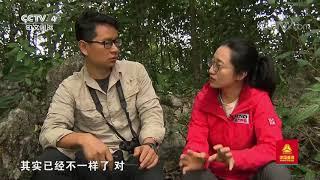 [远方的家]行走青山绿水间 翻越喀斯特石山 追踪东黑冠长臂猿| CCTV中文国际