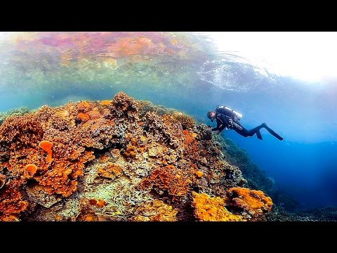 Ocean: A 360-degree tour of the mysterious, magical corals of Palau