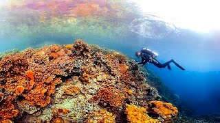Ocean: A 360-degree tour of the mysterious, magical corals of Palau | The Economist