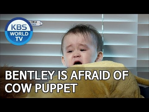 Bentley is afraid of cow puppet [The Return of Superman/2019.06.09]