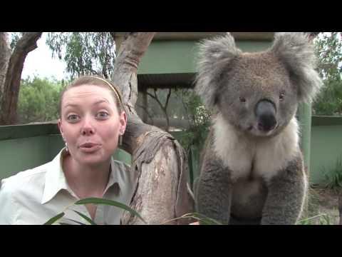 Phillip Island Penguin Parade   Australia Tours
