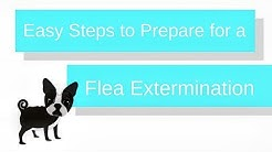 Steps to Prepare for a Flea Extermination   FullScope Pest Control