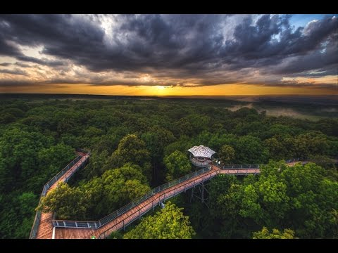 Hainich National Park – ancient woodland in the heart of Germany