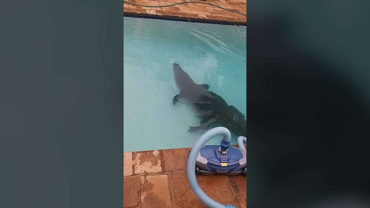 There's a Crocodile in my Pool!