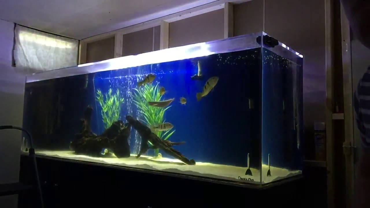 300 gallon freshwater aquarium 1000 aquarium ideas for 300 gallon fish tank