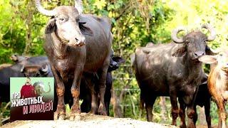 Шри-Ланка. Часть 2 - Про животных и людей | Живая Планета