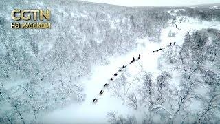 2018 Северный полюс Серия 2 Жители крайнего Севера Часть 2