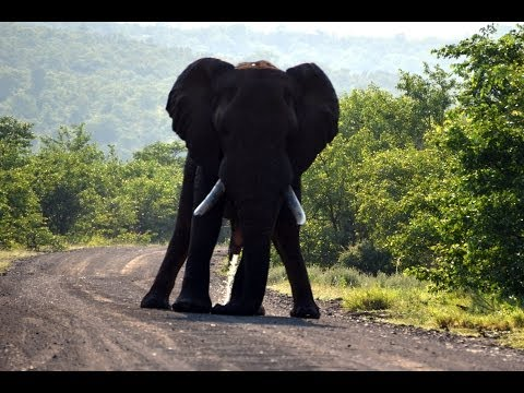 A Different Family Safari to Kruger