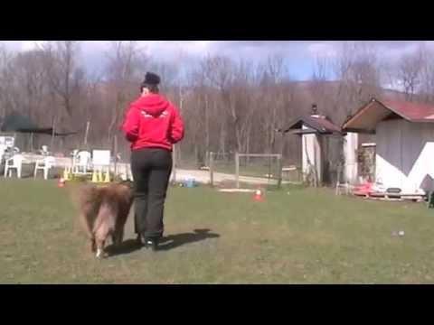 Dog dance – Elementi base (Centro cinofilo Spilimbau)