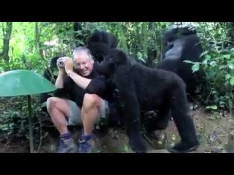 Africa Adventure Vacations Gorilla experience