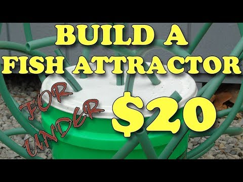 How To Build A Fish Attractor For Under $20