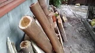 видео Щит из ореха