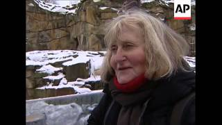 Polar bear Knut enjoys cold weather, primates given blankets