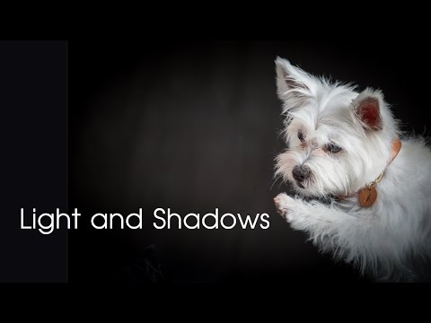 Light and Shadows - Dog photo shoot in the studio